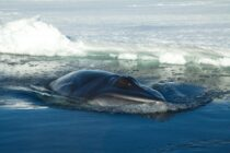 Water Revolution Foundation crowdfunding for ocean conservation